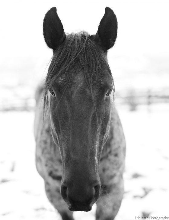 YourHorseFarm.com: An Equestrian Lifestyle Blog