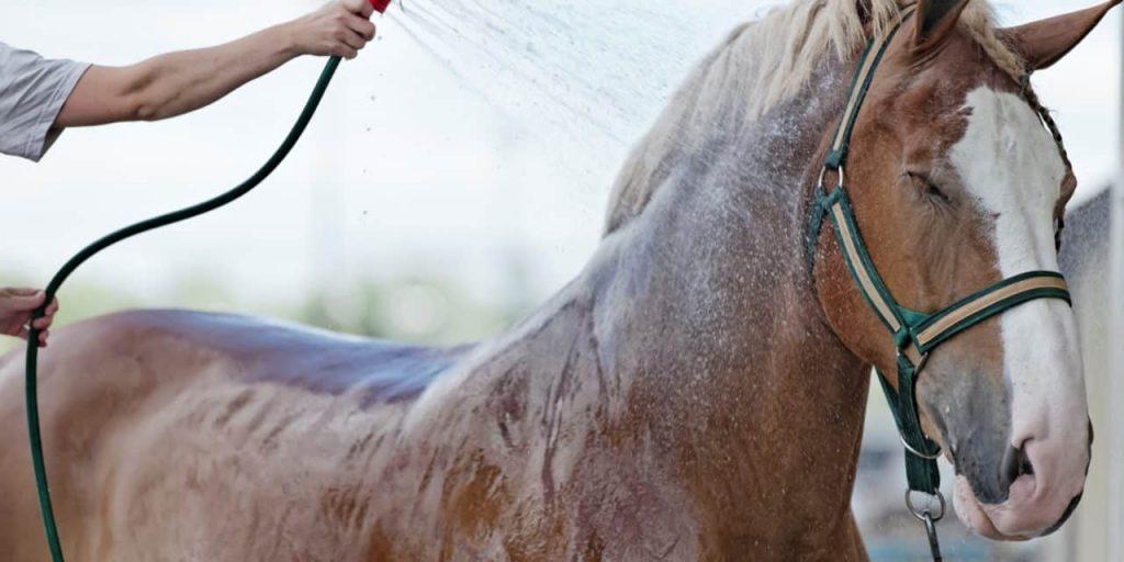 Horse getting bath