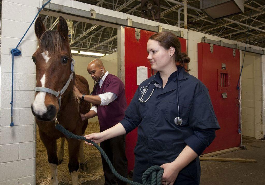 Equine Careers Horse Careers