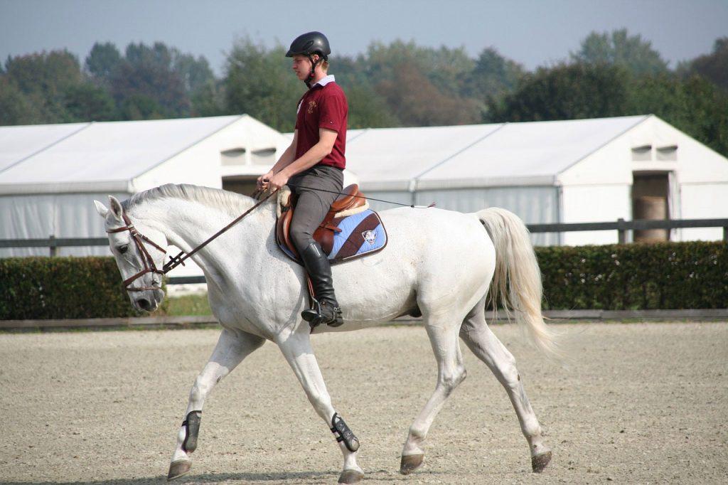 Cross training Equestrian