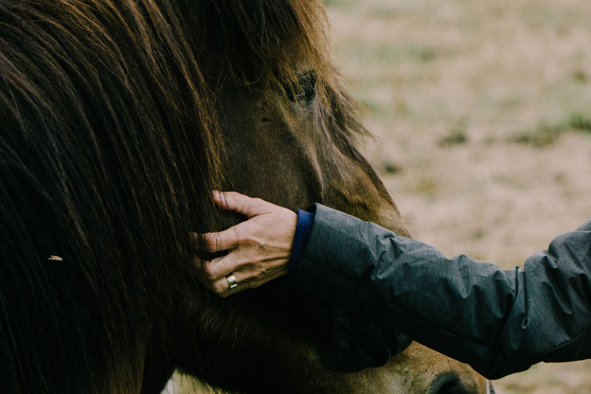 Mares Vs Geldings Is One Better Than The Other Your Horse Farm