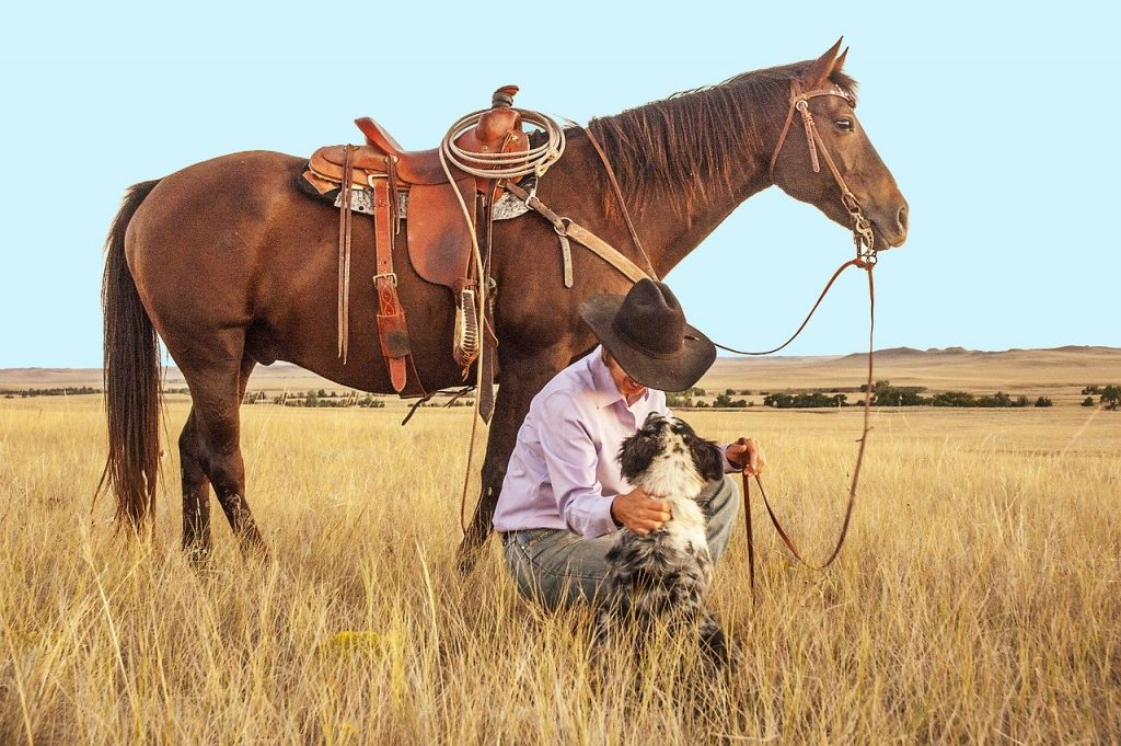 English Riding Tips For The Western Rider Your Horse Farm