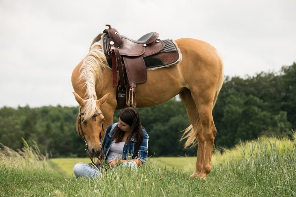 5 Beautiful Coat Colors In Horses Your Horse Farm