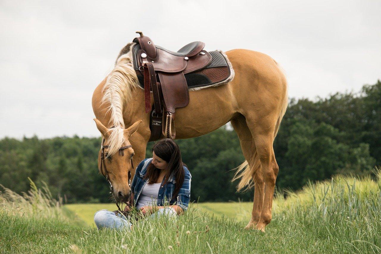 5 Beautiful Coat Colors In Horses Your Horse Farm