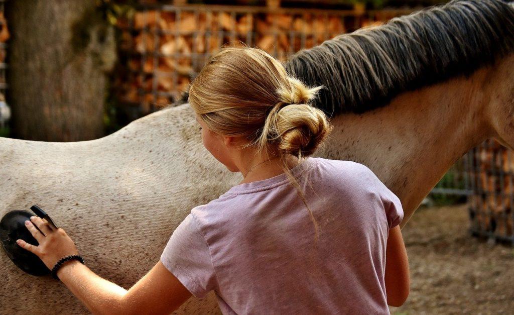 Girl brushing horse