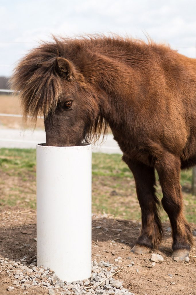 Horse drinking out of drinking post waterer