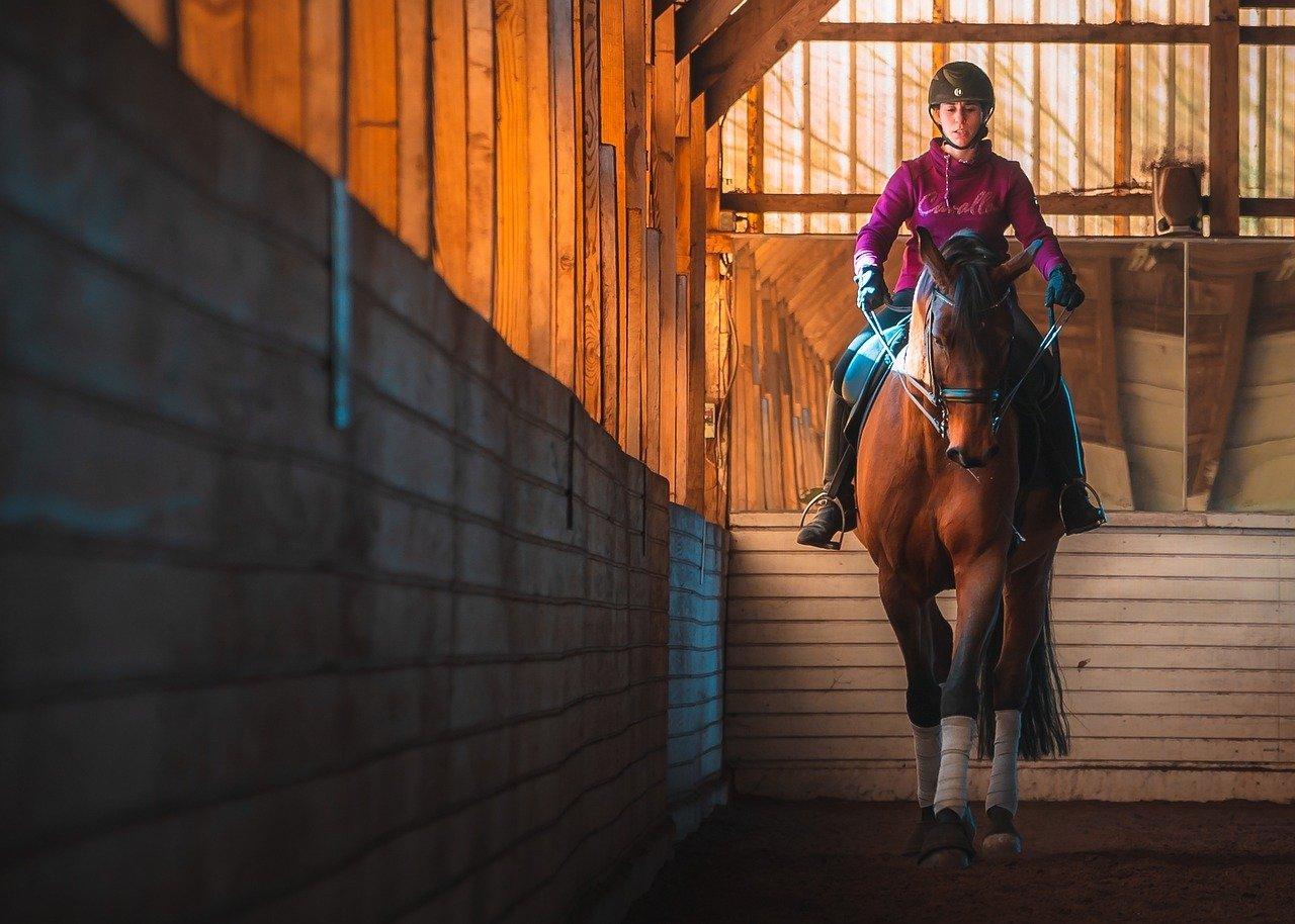 Rider on horse.