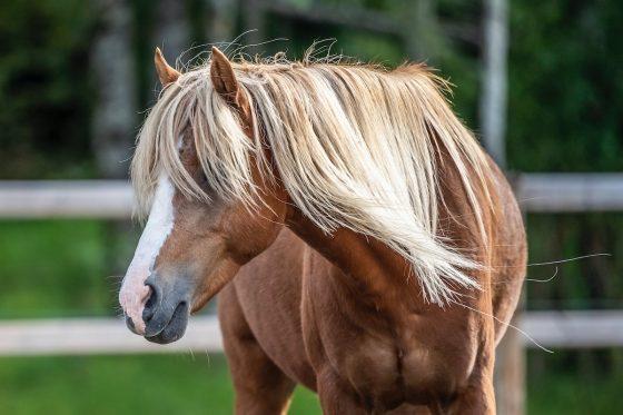 shedding horse