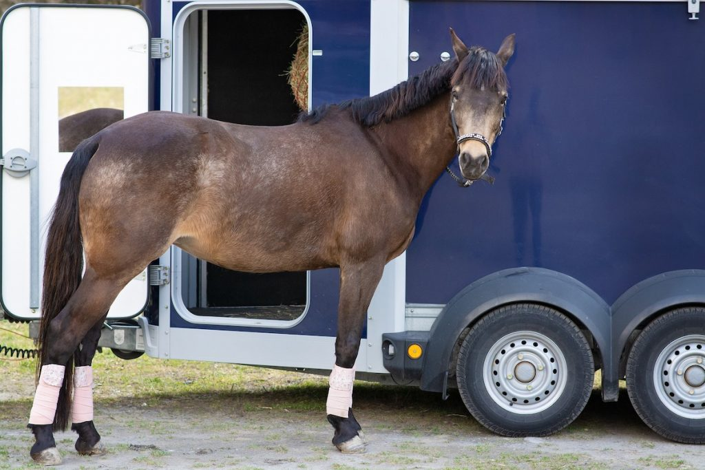 Horse by trailer