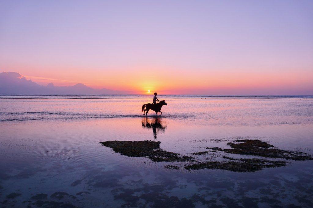 horse at beach